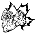 Havanese Fanciers of Canada Specialty